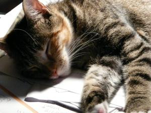 Sleeping Maude