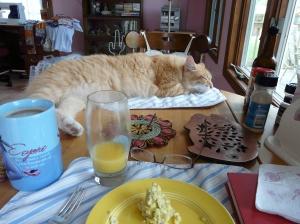 Breakfast with Zip