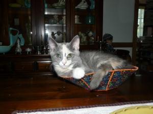 Cora in a bowl