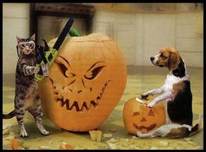 1351363544944-halloween_cat_and_dog